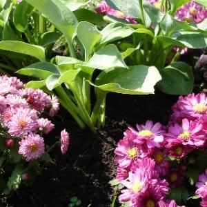 flowergardenplants
